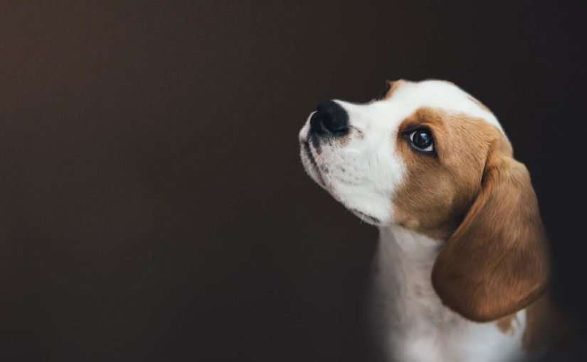 Cancer in Dogs: What You Need to Know
